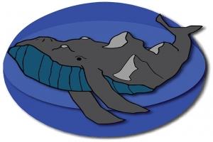 Damon Desrivieres, Mountain Whale