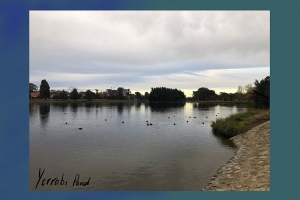 Archer Tomlinson, Yerrabi Pond