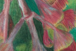 Kirandeep Grewal, Colours of Casey