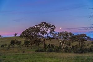 Michael Billing, Crace Sunset
