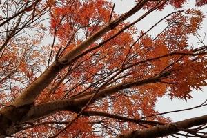 Vishnu Chari, Autumn Leaves