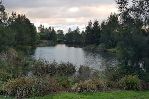 Ranjini Iyengar, Franklin Pond