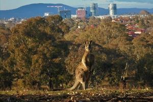 Thomas Dyne, Kangaroo Pose