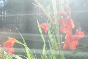 Taina New, The Last Flower through my Living Room Window