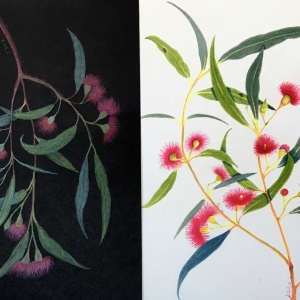 Dancing eucalypts by Sarah Lumley