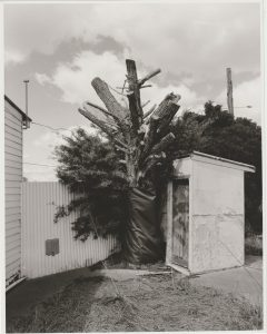 Alex Flannery, Landscape 8, Photo printed on darkroom paper