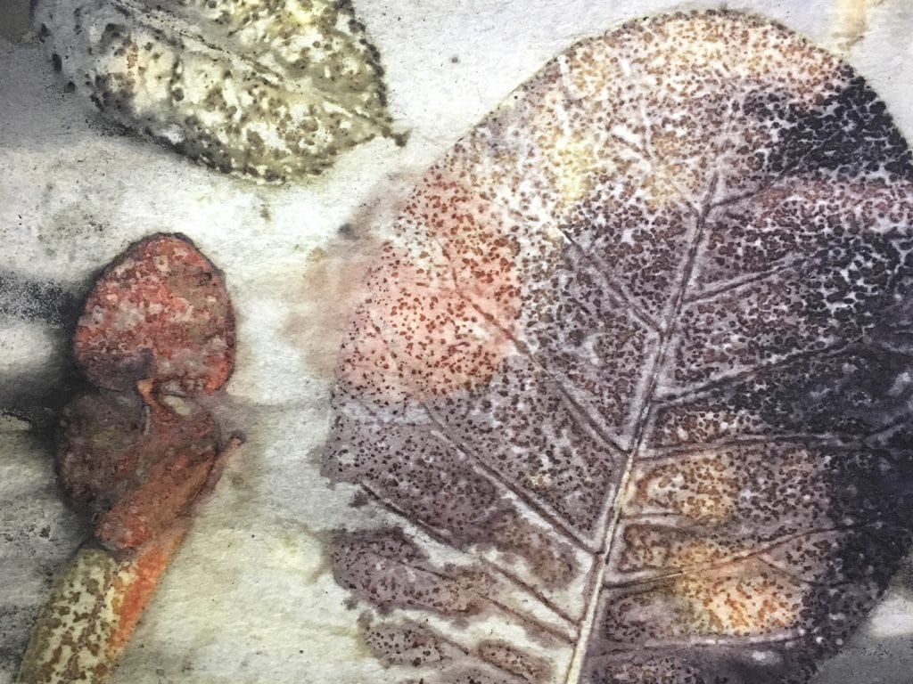Leaf Prints and Plant Dyes on Paper with Sally Blake